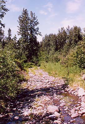 The trail that got me into bear country and up to the border of the Denali National Park.